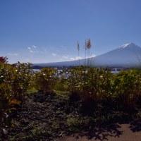 花穂と富士山