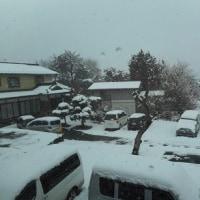 山梨県K.T.Tスポーツボクシングジム公式ブログ・・・ Owner's つぶやき「 春の雪 」