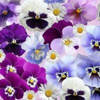 3/28 ∬ レゴランド名古屋にオープン ∬ φ 春を呼ぶ庭の草花 φ