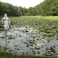 みそぎ池を訪ねる