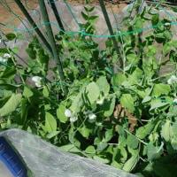 気持よい風と花、夏野菜準備の日