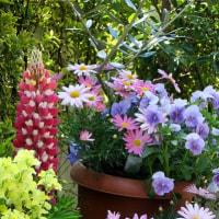 心癒される我が家の植物たち
