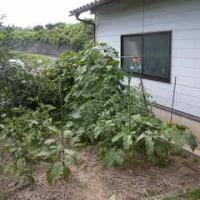 日本の夏、草刈の夏(ぬりかべ)