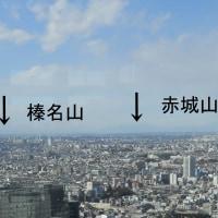 都庁からの景色