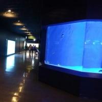 今日は水族館です