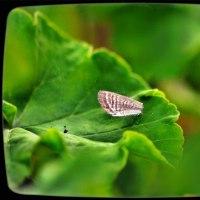 カマキリさんと蝶さん<前の畑にて>