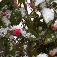 カホンと雪と・・