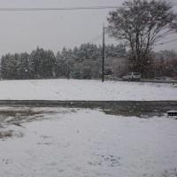 今日は朝から雪が降り出した