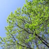 新緑の季節に2