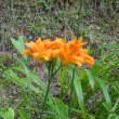 北設楽郡で咲いていた花など・設楽町~豊根村富山付近(7月20日)