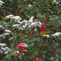 雪の錦織公園