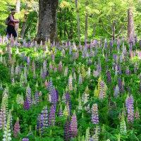 武蔵丘陵森林公園に