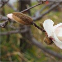 植込みの木々もやっと春めいてきた