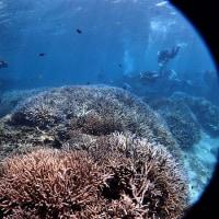 海という偉大なる大自然の中でのダイビング