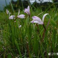 平成29年6月28日(水) 裏山で花見♪