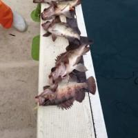 今日のサビキ釣り