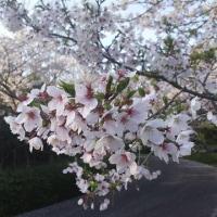 4/13~4/19タイムランチのお知らせ