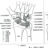 指圧の時に母指が痛む     金沢市   整体   カイロプラクティック