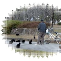 ノラ猫ちゃんに占拠された慰霊碑
