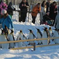 旭山動物園 ペンギンパレード