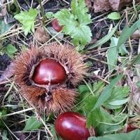 熟し柿の恐怖