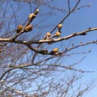 春を見つけて