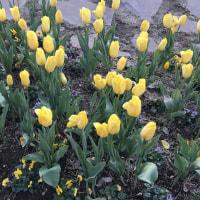 花いっぱいの公園
