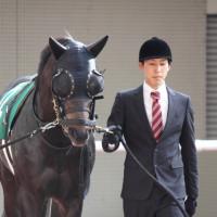 先週土曜の阪神競馬の東サラ馬たち