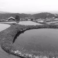 梅雨時期の奈良里山