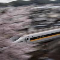 お花見と新幹線