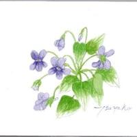 自然のままに咲く花を 描き留めたい、、、
