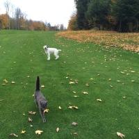 葉が落ちてスカスカになった森を歩いた日曜日