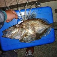 [釣り歴]2000年1月・船釣り中心