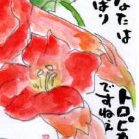 咲いたよ~(^_^)v