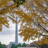 2016.11.13 光が丘公園: 黄葉の中の煙突