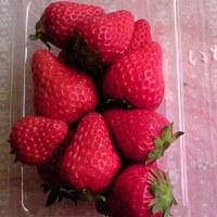 採れたてのイチゴをいただきました♪