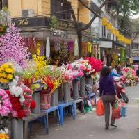 2017.01.15 ハノイ旧市街: 色鮮やかな「造花屋街」
