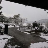 今日も雪で吹雪かれています。