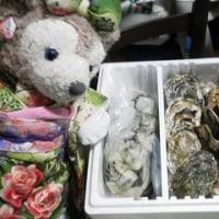 おにいさんのおともだちから、生牡蠣をいただきました