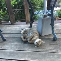 ネコの恋 😻