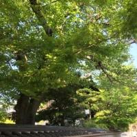 京都   お墓参り