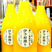 興居島の「いよかんジュース」入荷♪