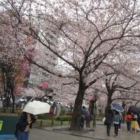 浅草のランチと桜めぐり