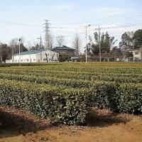 「今日の日記、武蔵野の田園風景の写真を撮りに行きました」