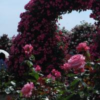6月20日(火曜日)「薔薇の門」(あかねこさん)