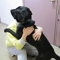 塀の中で盲導犬めざし子犬を育成 受刑者たちが世話