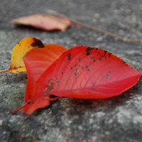 まだ、半そでの人もいるけど、秋の訪れはたしかに感じる