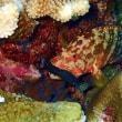 透明度が上がった。沖縄ダイビング 那覇シーマリン