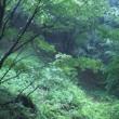 呉羽山はお茶畑だったそうです。