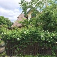 """近所のバラ愛好家の""""バラ""""咲き始めました"""